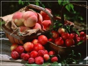 gyümölcskeretes